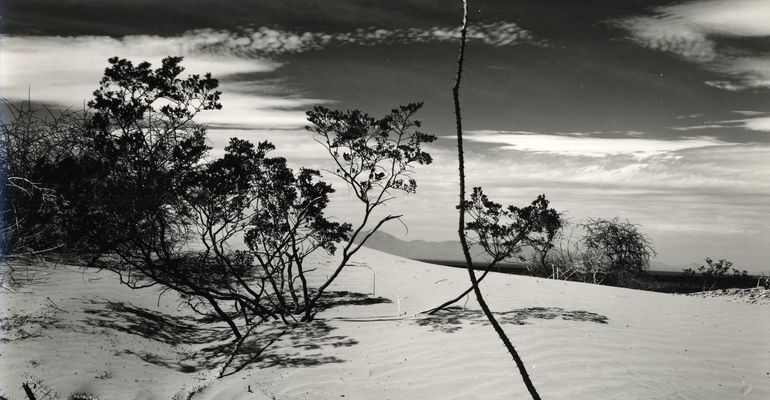 Brett Weston in the 1940s