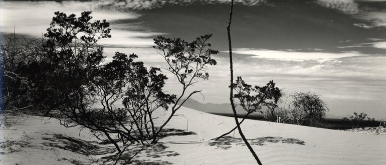 Weston Photographs: White Sands in the 1940s